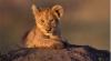 African reserve: Tahiyah Wildlife Reserve