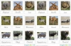 African reserve: Save the savana!!!!