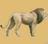 African reserve: The Zulu Clan