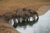 African reserve: shamwarie reserve