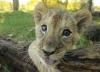 African reserve: Savsnnah Hannah