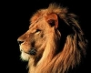 Trae_Sosa - Lionzer player