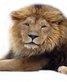 Luvterriers - Lionzer player