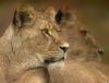 GodsGraceis4ever - Lionzer player