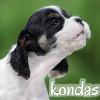 kondas - Lionzer player