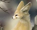 minette - Fennec Fox (1 month)