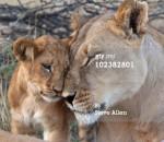 Lea - Lion (4 years)