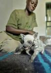 hienas bebes caminando - Striped Hyena (1 month)