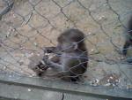 14. Vor den Affen hatte ich große Angst. Nur vor diesem kleinen Pavian nicht. -