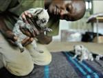 hienas rayadas bebes - (1 month)