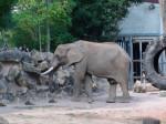 elephant -