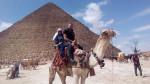Camel - Male