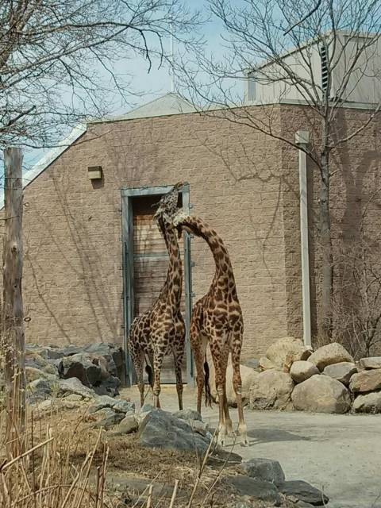 Zoo Animal -