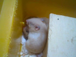 Kenny - Male Hamster (6 months)