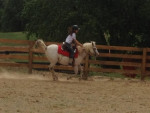 Marshmellow - Male Horse (8 years)