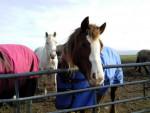 Berry - Pony (7 years)