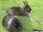 Nicki - Male Rabbit (6 years)