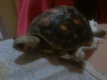 Mory - Turtle (7 months)